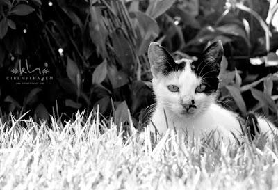 [BELGESEL] Kediler ve Kedi Belgeseli