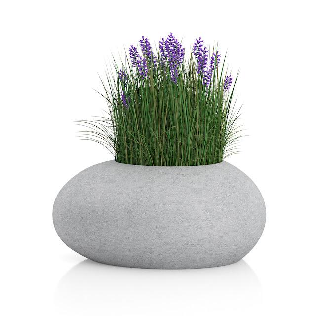 3D model free -  Plants_13
