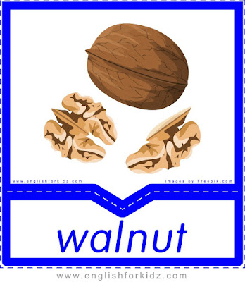 Walnut - English flashcards for the fruits, vegetables, nuts and berries topic