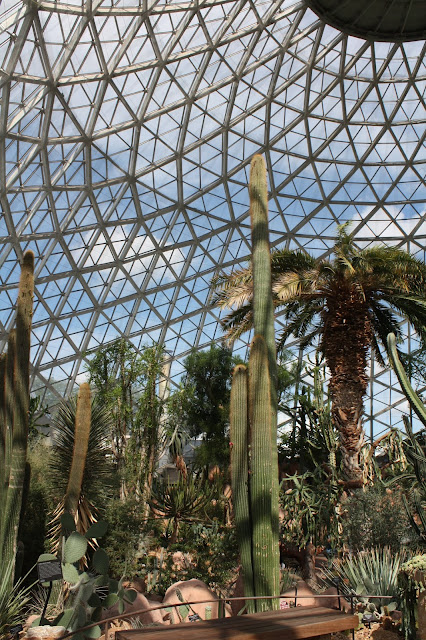The Desert Dome at the Mitchell Park Domes in Milwaukee features plants from a variety of deserts across the world.