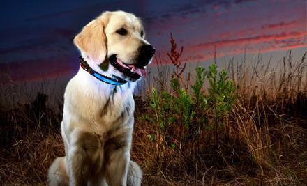 Led halsband met verlichting voor de hond | Huisdier Tips 2018
