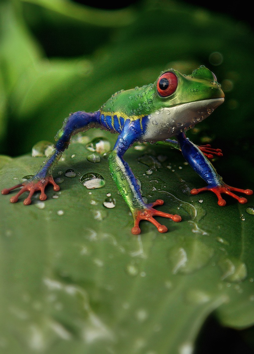 Tree frog natural wetsuit.