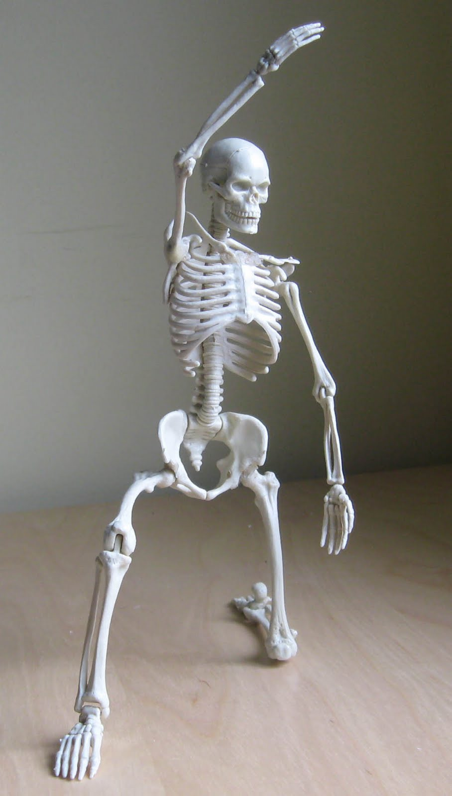 Illustration Fixation: Skeleton Model