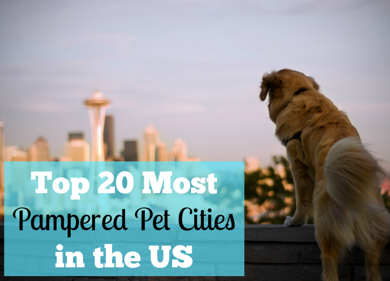 Top 20 Most Pampered Pet Cities In The U S Pawsitively Pets