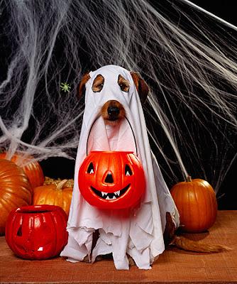 disfraces de halloween para perros fantasma