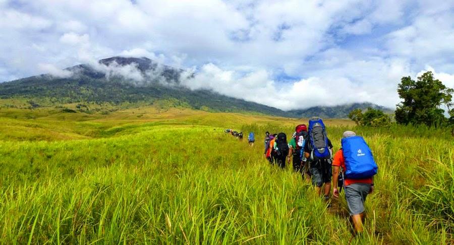 Savanna Grass Tall at Sembalun Lawang altitude 1500 m National Park of Mount Rinjani