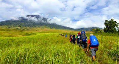 Savanna Grass Tall at Sembalun Lawang altitude 1500 m National Park of Mount Rinjani