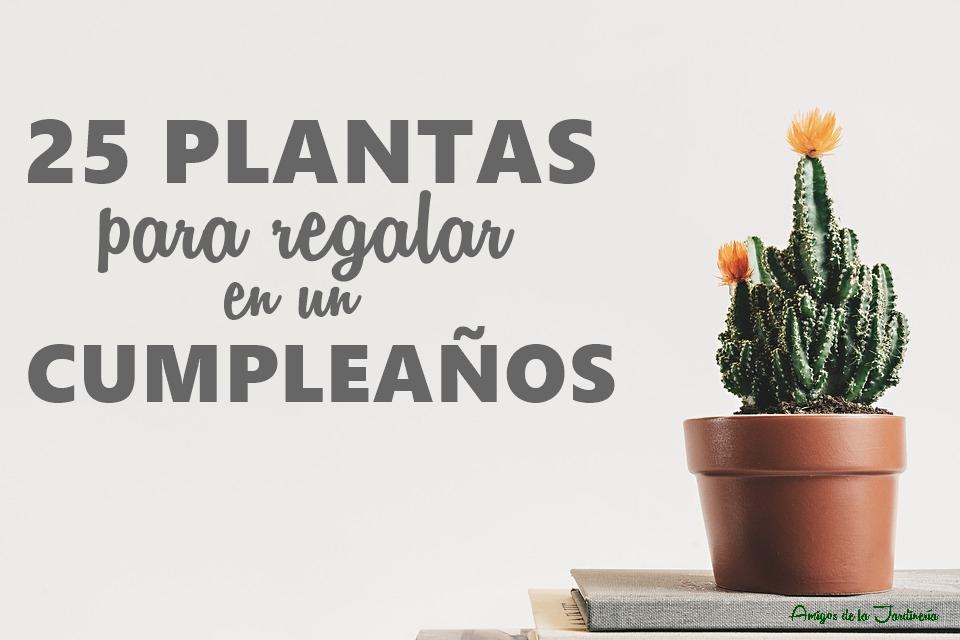 25 plantas para regalar en un cumplea os amigos de la for Cual es el regalo perfecto para un hombre