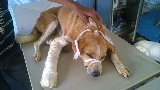 treatment camp for animals