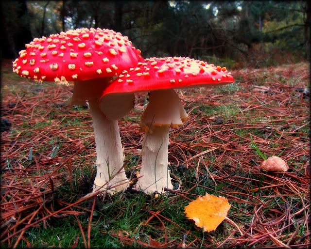 English toadstools in autumn