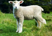 Testimony of the Lost Sheep Returned, true story