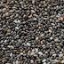 Chia Seeds meaning in marathi, tamil, telugu, kannada, gujarati, malayalam word language, in hindi name, in marathi, indian name, tamil, english, other names called as, translation
