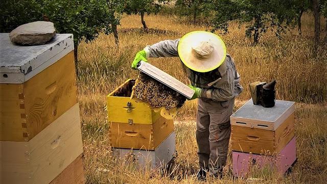 Μελισσοκόμος για μια μέρα στο Μουσείο Μελιού Ermionis στο Κρανίδι