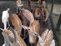 Feed and pet deer and other live creatures