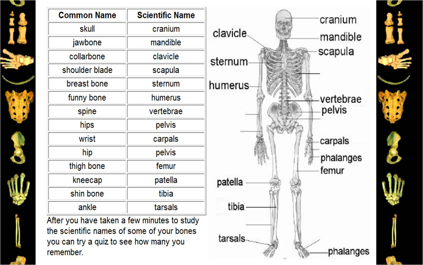 names of bones in human skeleton diagram pioneer deh p4200ub wiring english edublog insal ahuachapán the body