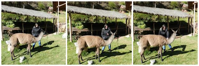 Awanakancha, Valle Sagrado, Peru