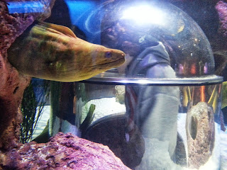 Conger Eel SeaLife Manchester Trafford Centre