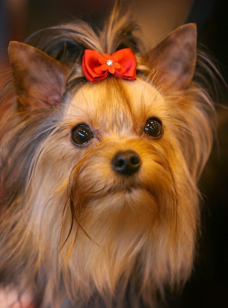 962cfbd881b4 Θυληκά ονόματα σκύλων. - Puppy Doggy