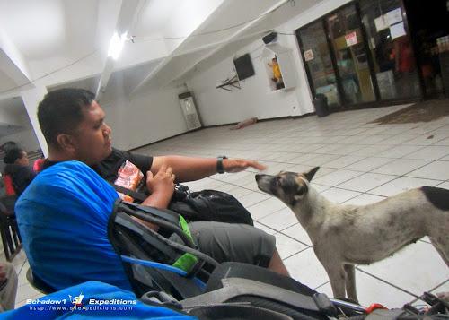 Survivor dog Tacloban Bus Terminal - Schadow1 Expeditions