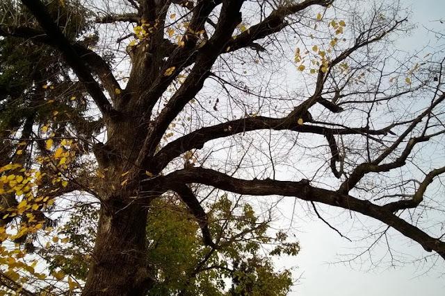 bambini scoiattolo autunno