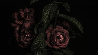 immagini rose per amore