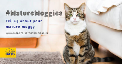 Tell us about your mature moggy