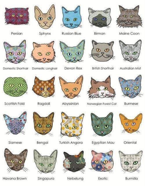 Nama Kucing Yang Comel 81021 Nama Untuk Kucing Comel Lucu Dan Unik