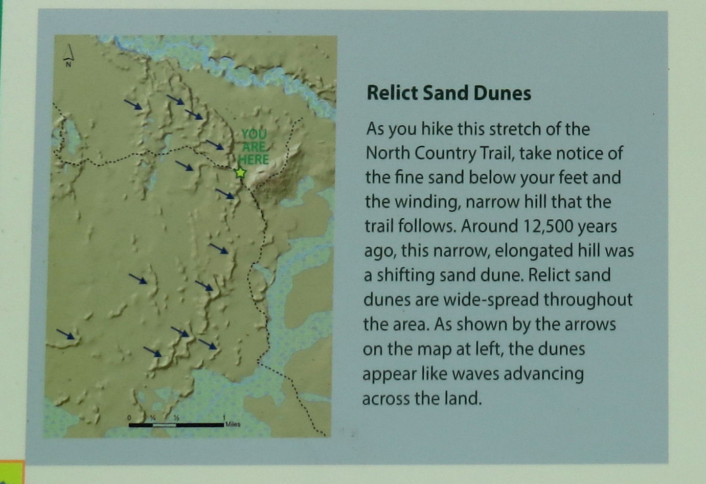 stabilized sand dune interpretive panel