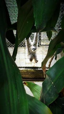Lingkungan Habitat Owa Jawa
