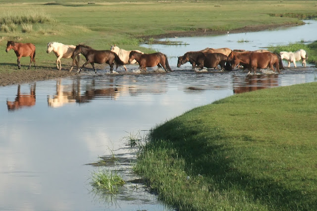 Shifting monsoon altered early cultures in China, study says