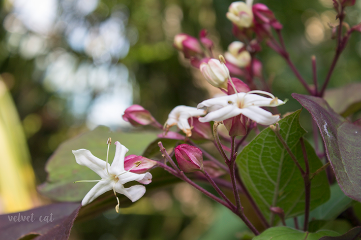 jardines botanicos fondos descargables