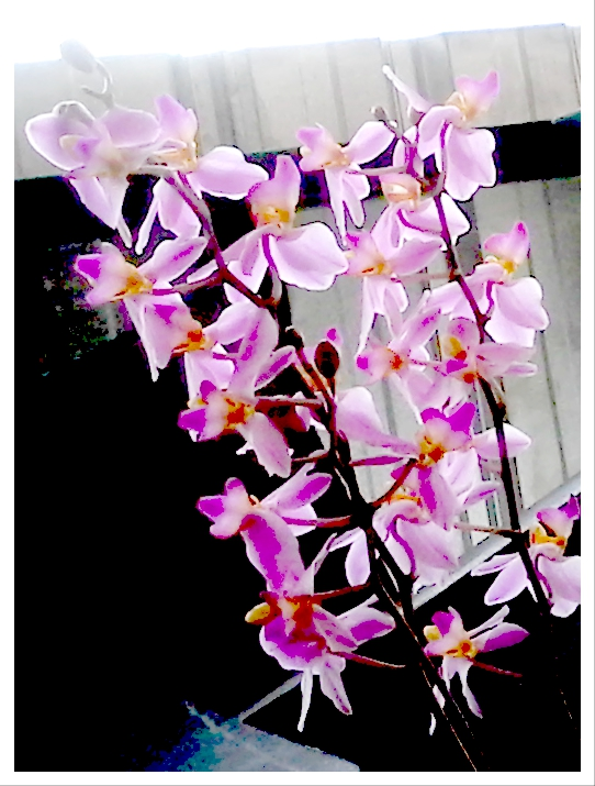 how to take care of orchids after they bloom