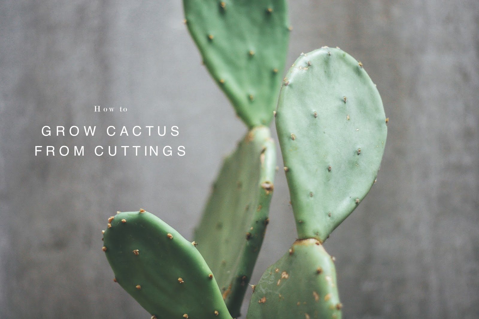 Cool Plants For Your Room Grow Cactus From Cuttings L J U B E Z N I C E
