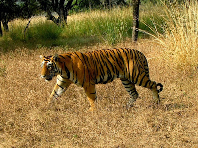 hastinapur-wildlife-sanctuary-timing