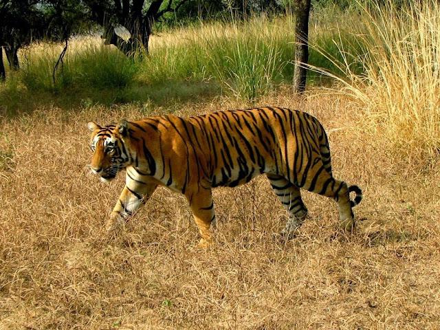 best wildlife sanctuaries in india