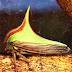استعمال الألوان والأشكال - كيف ينصهر الحيوان في الطبيعة؟ - فن التستر