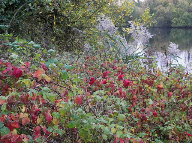 Bramble with red leaves by Deep Water