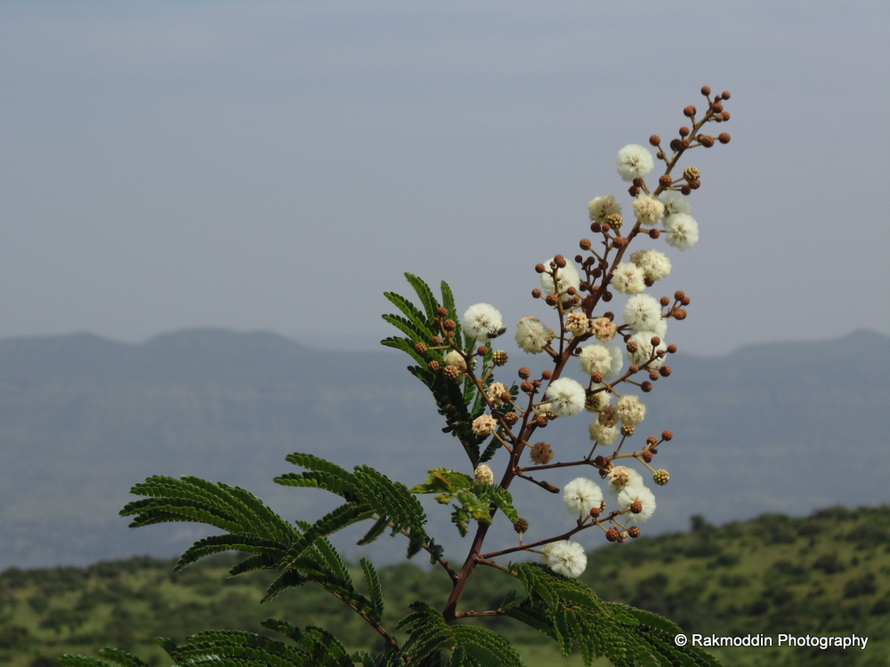 Kas Pathar - Flowers valley in Maharashtra