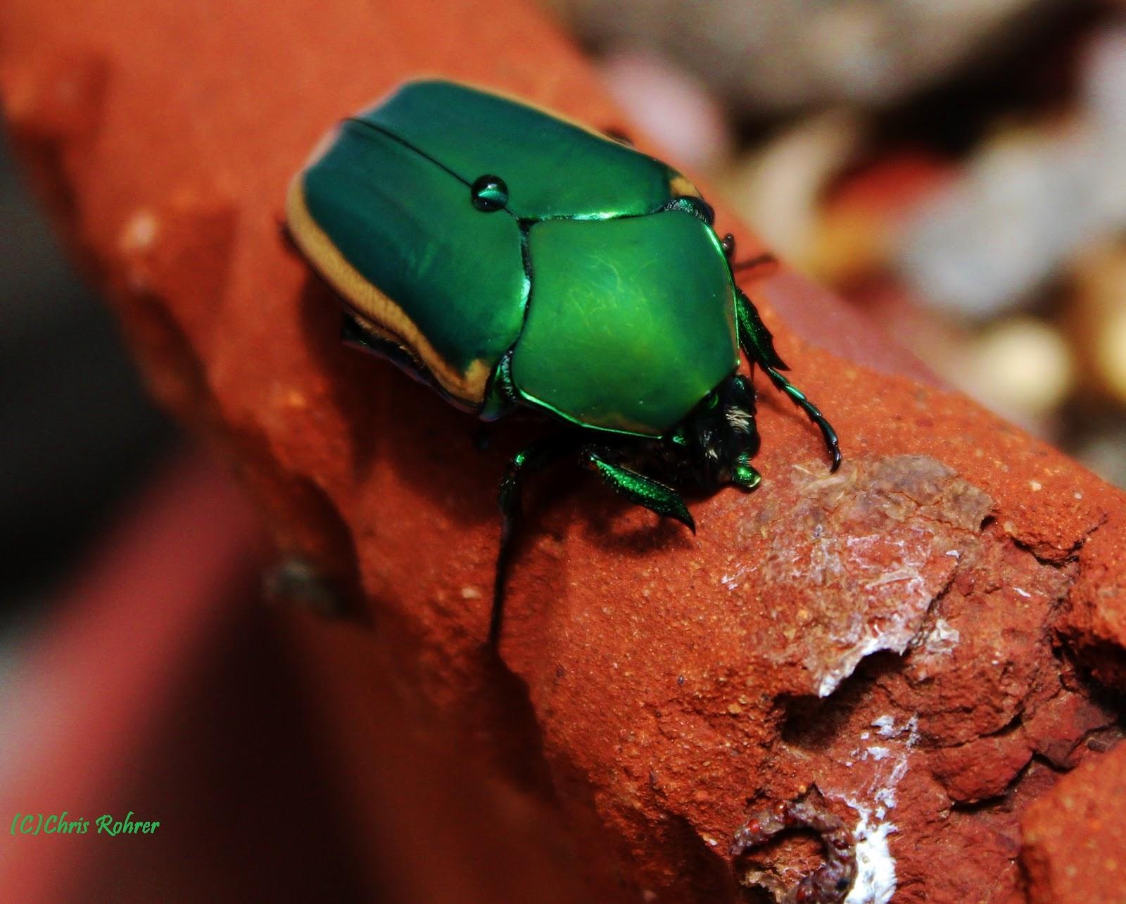 Las Aventuras: Alien Bugs