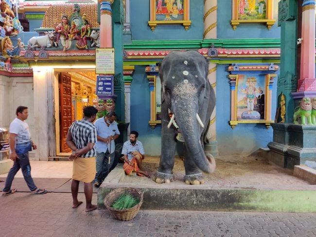 Manakula Vinayagar Temple Elephant