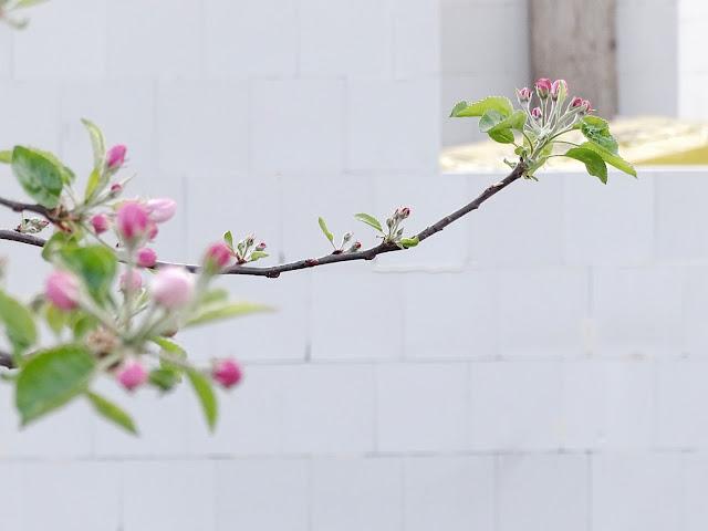 Bautagebuch Teil 3 | Bau eines freistehenden Einfamilienhauses | Über den Rohbau bis zum Richtfest | www.mammilade.blogspot.de | Personal Lifestyle, DIY, Interior Blog | Apfelblüte