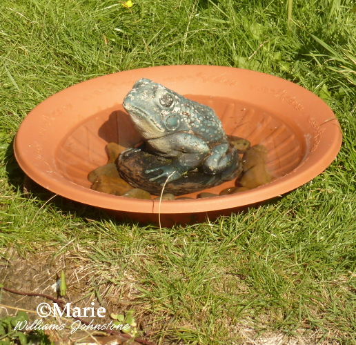 How To Make A Simple Bird Bath With Found Items