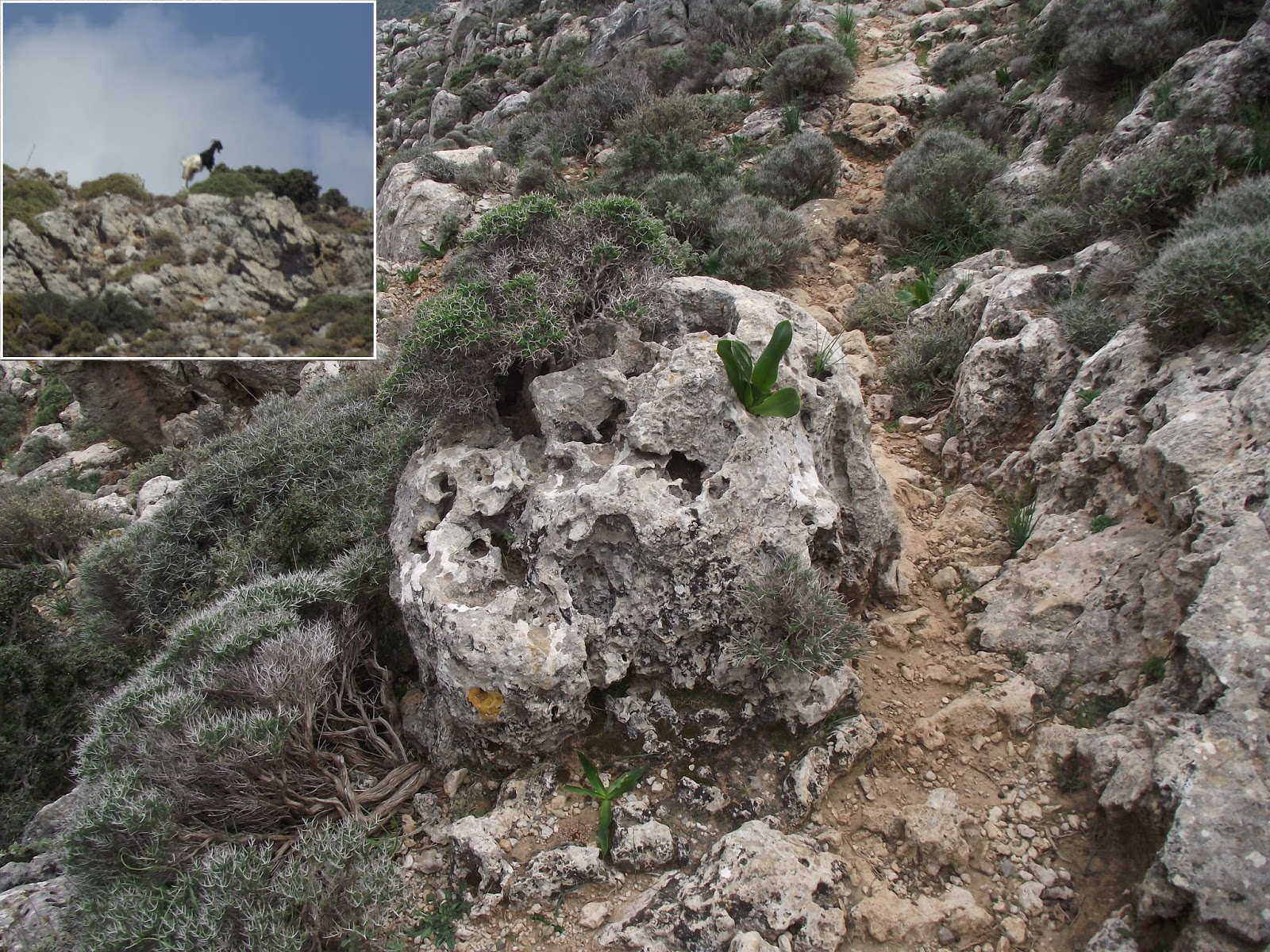 Crete Nature Blog The Cave Of The Two Toned Goat
