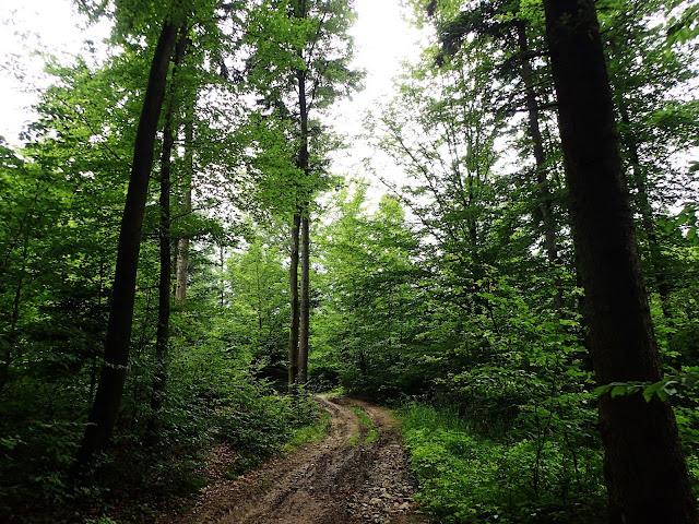 Wchodzenie na Liwocz od Jabłonicy to głównie las