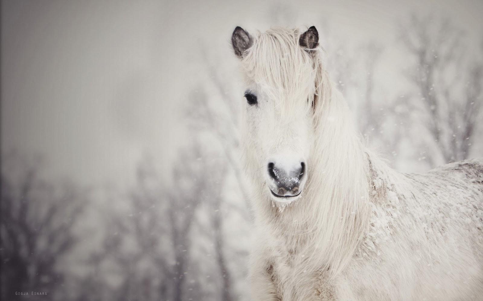 keindahan-kuda-musim dingin-foto-foto-wallpaper-1920x1200