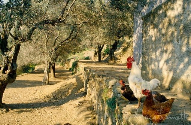 Ilias Mathes Has Protection Against Bank Closures Capital Controls And The Slashing Of His Pension 10 Goats Some Hens A Vegetable Patch Starts
