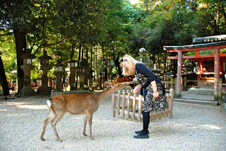 Pat Dunlap Feeding Bowing Deer of Nara Japan