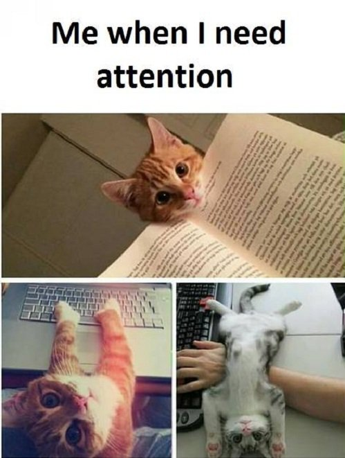 Me when I need attention-funny memes