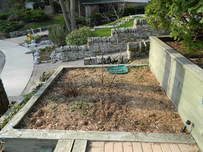 The Beach Toronto Front Garden Tier Five Before by Paul Jung Gardening Services--a Toronto Gardening Company