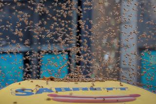 بالصور: سرب من النحل يغزو أشهر ساحات نيويورك!